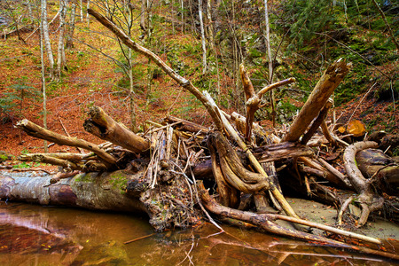 Landscape with drift wood piled up in a river photo