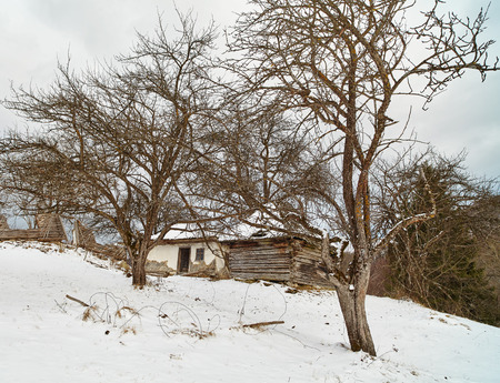 Old ruined abandoned house among trees in the winter photo