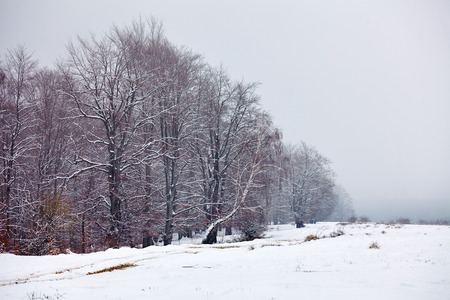 snowscape: Winter landscape with forest covered by snow