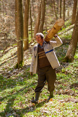woodcutter: Strong senior woodcutter carrying a log on his shoulder Stock Photo