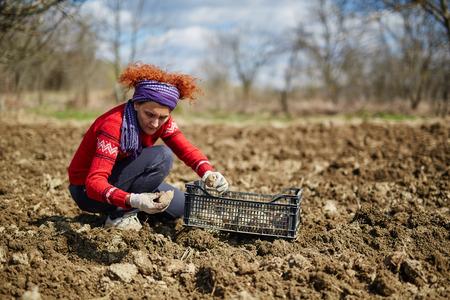 siembra: Mujer sembrar tub�rculos de papa en el suelo arado