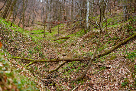 broken hill: Fallen trees in a deciduous forest on a spring day Stock Photo