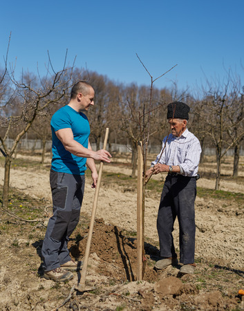 son in law: Senior farmer teaching his son in law how to plant a tree in an orchard Stock Photo