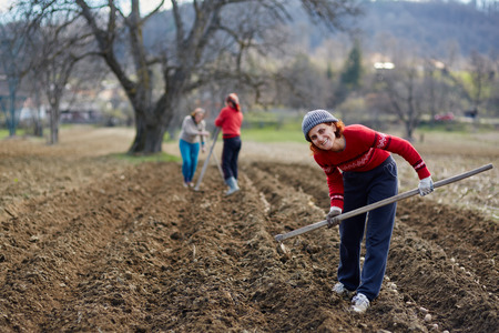 sowing: People sowing potato tubers into the plowed soil