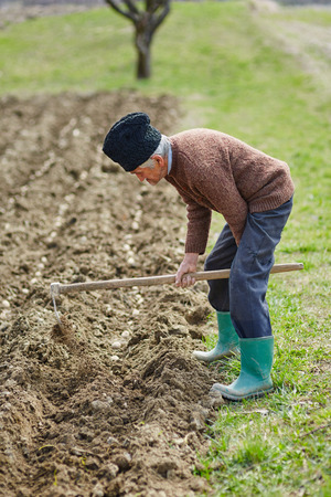 siembra: Hombre mayor que cubre las patatas con tierra; actividad patatas de siembra Foto de archivo