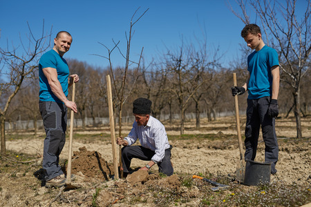Senior farmer teaching his grandson and his son in law how to plant a tree in an orchard, three generations family working together photo