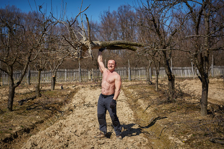 wrest: Powerful man raising an uprooted tree with one arm in an orchard on springtime