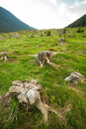deforestation: Landscape with stumps left after deforestation