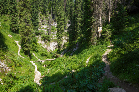 marked: A mountain marked trail through an old fir forest Stock Photo