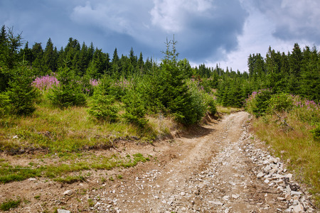 dirt: Summer landscape with dirt road and pine forest