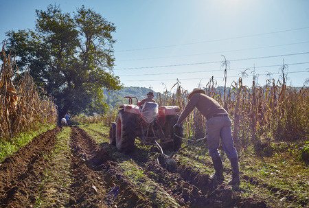 Family of peasant harvesting potatoes with a tractor and plough Stock Photo