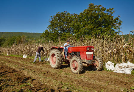 plough land: Family of peasant harvesting potatoes with a tractor and plough Stock Photo