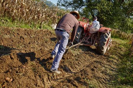campesinas: Familia de patatas de cosecha campesina con un tractor y arado