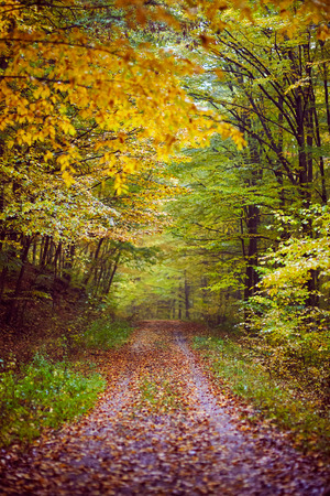 road autumnal: A forest road covered with leaves, autumnal scene Stock Photo