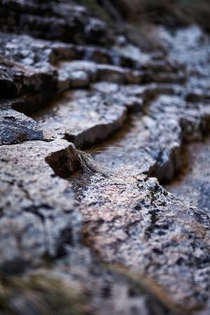 sedimentary: Closeup of a sedimentary mountain limestone rocks, with selective focus