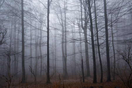 scary forest: Landscape with a scary forest and thick fog in the morning