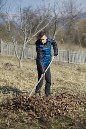 tillage: Teenage farmer cleaning up the fallen leaves in an orchard