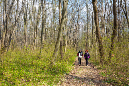 hornbeam: Mother and son walking through a beautiful hornbeam forest