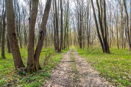 hornbeam: Hiking trail in a beautiful hornbeam forest