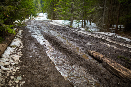 muddy: Muddy road into a pine forest in the mountains