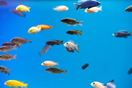 fish tank: A variety of small fish in a tank