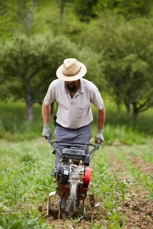 MOTORIZADO: agricultor joven deshierbe en un campo de maíz con una caña de timón motorizado Foto de archivo
