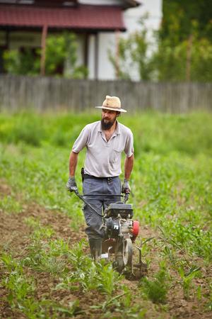 motorizado: agricultor joven deshierbe en un campo de ma�z con una ca�a de tim�n motorizado Foto de archivo