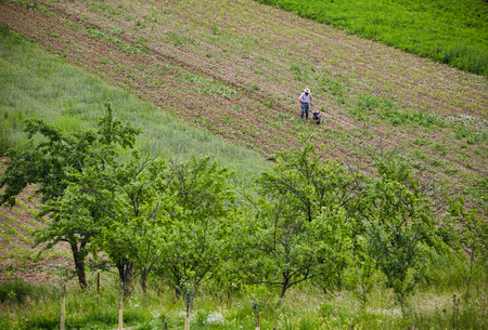 motorized: Aerial view of a farmer weeding in a corn field with a motorized tiller Stock Photo