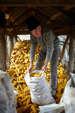 old farmer: Old farmer man in his barn full of corn