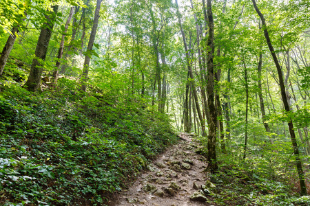 wooden trail sign: Hiking trail through a lush deciduous forest in the summer Stock Photo