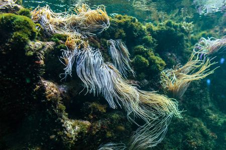 ecosistema: Reef ecosystem underwater with snakelocks anemone and plants Foto de archivo