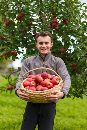 Young country boy picking red apples at harvest time