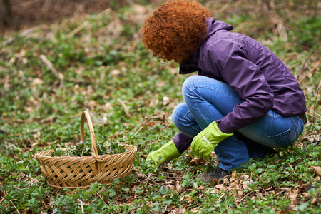 Curly redhead farmer woman picking nettles in a basket Stock Photo