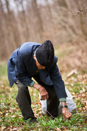 Senior man picking nettles in a bag in the forest photo