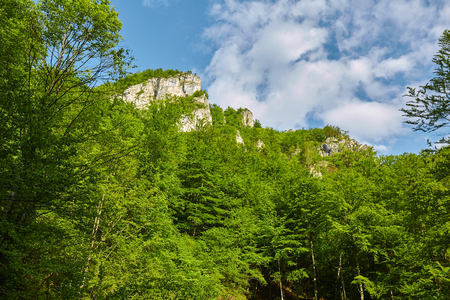 Landscape with limestone mountains engulfed in deciduous forests