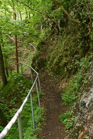 Randonnée pédestre dans les montagnes avec une végétation luxuriante