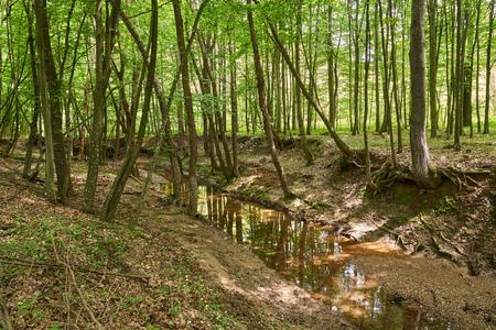 Paysage avec forêts à feuilles caduques de chêne et de hêtre Banque d'images