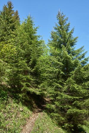 Paysage avec un sentier de randonnée à travers la forêt dans les montagnes Banque d'images