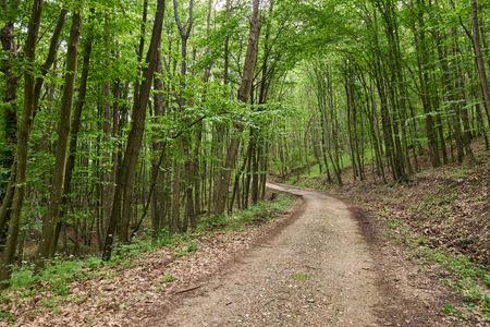 A gravel road going through a deciduous forest Banque d'images