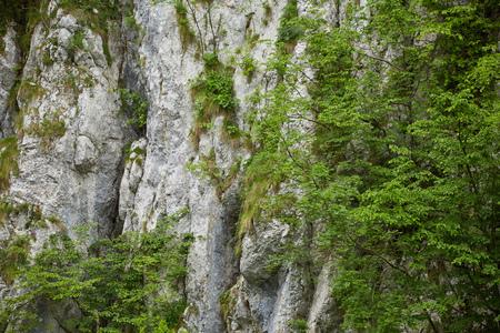 La végétation se développe dans les fissures d'un mur de montagne calcaire Banque d'images