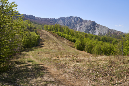 Landscape with mountain range and forests
