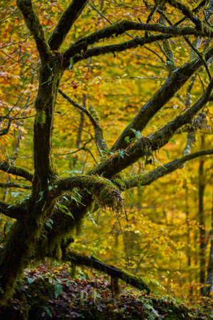 Tree covered in mos in the forest during autumn