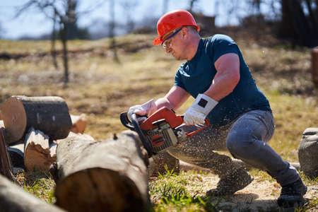 Lumberjack with chainsaw cutting big beech logs Stock Photo