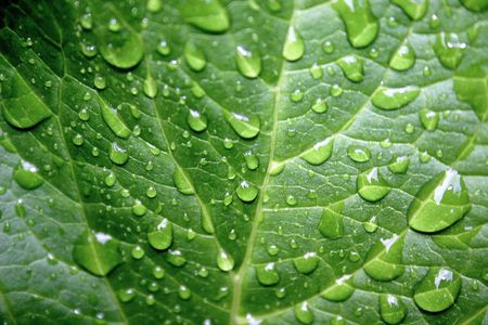 a grean leaf with drops