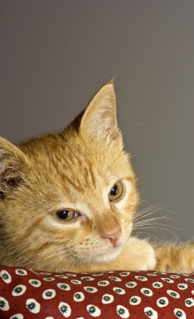 a orange cat - stil life photo