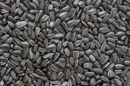 Black sunflower seeds. For texture or background Фото со стока