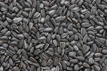 Black sunflower seeds. For texture or background Zdjęcie Seryjne