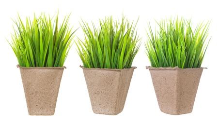 Seedlings isolated. Cardboard pot for growing plants with sprouts on white background.