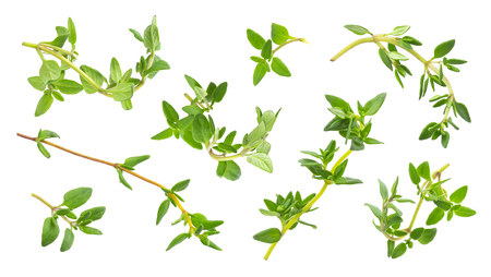 Thyme fresh herb isolated on white background with clipping path, collection