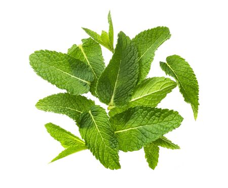 Pile of mint leaves isolated on white background, top view Imagens